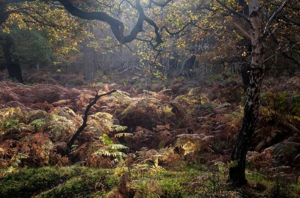 windsor-forest-7
